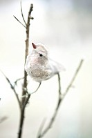 Bird ornament Sweden.