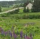 Prince Edward Island _ Canada