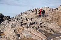 Chinstrap penguins, Gourdin Island, Antarctic Peninsula, Antarctica, Polar Regions