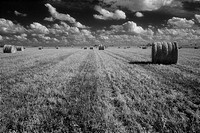 haybales, field, agriculture,