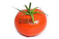 Isolated Wet Tomato.