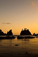 USA, Washington, Olympic National Park, Shi Shi Beach, Point of Arches, shore at dusk