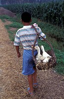Boy with ducks in basket for sale, Shandong, China