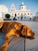 Dog rests in miain square in Oia, Santorini, Greece