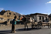 Nomadic Tibetan boy holding the bridle of a decorated horse, horse carriages in front of traditional Tibetan farmhouses with Sakya colouring, Tingri, ...