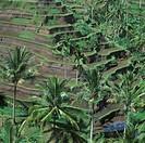 Terrasse Rice Fields, Bali, Indonesia