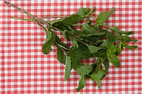 Mint, Seasoning, Brazil