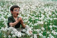 boy sitting on dandelion meadow, blowing a seed ball, Germany, Hesse