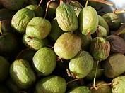 Tara Vine, Bower Actinidia, Mini Kiwi Actinidia arguta, ripe fruits