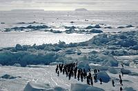 adelie penguin Pygoscelis adeliae, with Antarctic landscape, Antarctica, Atka_Bucht