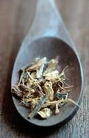 common liquorice, cultivated licorice, licorice, liquorice, sweet licorice, sweet wood, true licorice Glycyrrhiza glabra, Liquiritia officinalis, sele...