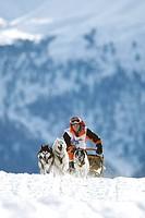 Siberian Husky Canis lupus f. familiaris, dog sledding Alpentrail 2004, Switzerland