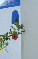 Whitewashed building and flower, Close Up