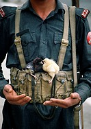 Soldier with two chicks balanced on his belt