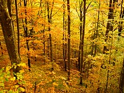 Deciduous forest in autumn