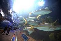 Sealife from the Oceanografic, Ciudad de Las Artes y Las Ciencias, city of Valencia in Spain