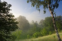 Meadow and thicket with morning mist, Germany, Saxony, Vogtlaendische Schweiz