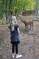 red deer Cervus elaphus, with child, Germany