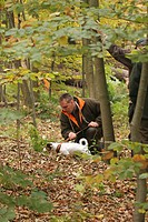 Jack Russell Terrier Canis lupus f. familiaris, trailing an animal, hunting exam, Germany
