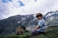 alpine marmot Marmota marmota, cheeky Alpine Marmot being fed by a small boy, Austria, Hohe Tauern NP, Grossklockner