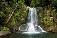 Waiau Falls, New Zealand, Northern Island, Coromandel