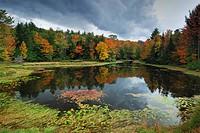 forest lake in autumn, Canada, Ontario, Algonquin Park