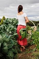 Hispanic woman gathering vegetables
