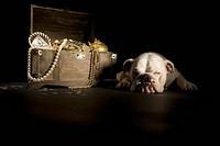 Bulldog sleeping next treasure chest