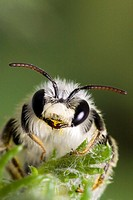 Bee, Portugal