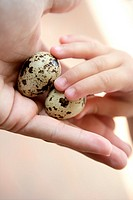 Quail eggs on mother hand, children holding one, education metaphor