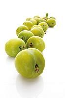 Greengages (Prunus italica)