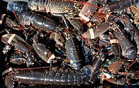 Pile of lobsters, Burnmouth, Scottish Borders, Scotland