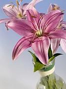 beautiful lily in glass mug still-life
