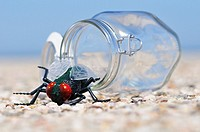 insect in front a open jar