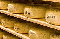 Wheels of Cheese at Natural Pastures production facility. Courtenay, The Comox Valley, Vancouver Island, British Columbia, Canada.