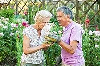 mature man offers rose to mature woman.
