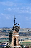 Stork´s nest on a steeple, Avila, Castilla, Spain, Europe