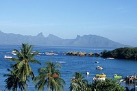 Coconut Trees, Yachts & Moorea, View from Sofitel Maeva Beach Resort, Tahiti, French Polynesia
