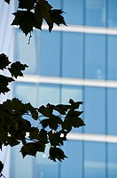 Silhouette Of A Branch With Leaves In Front Of A Building