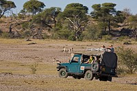 Tourists watching zebras from a safari vehicle in Botswana, Africa