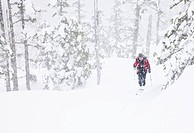 Mature man skiing the North Wrangell Trail in the Tongass national Forest, Wrangell Island, Southeast Alaska