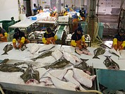 Native Aleuts filleting halibut in a commercial fishing plant, St. Paul Island, Southwest Alaska, Summer