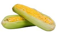 Close_up of corn cobs