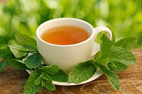 Mint infusion (Mentha sp.)