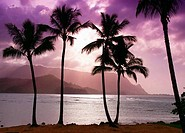Silhouette of palm trees on the beach, Bali Hai, Princeville, Kauai, Hawaii, USA