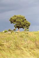 Tree in Haga Game Park, Harare, Zimbabwe