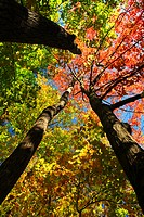 Colourful fall forest on a warm autumn day