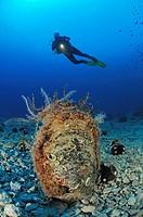 Noble Pen Shell and Diver, Pinna nobilis, Cres Island, Mediterranean Sea, Croatia