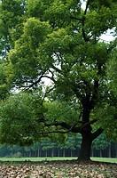 China, Shanghai, Tree