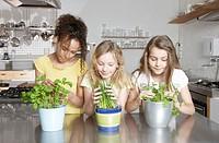 Kitchen, girl, three, flowerpots, herbs, different, views, half portrait, ,